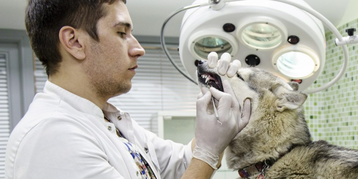 Что может ветеринарная стоматология