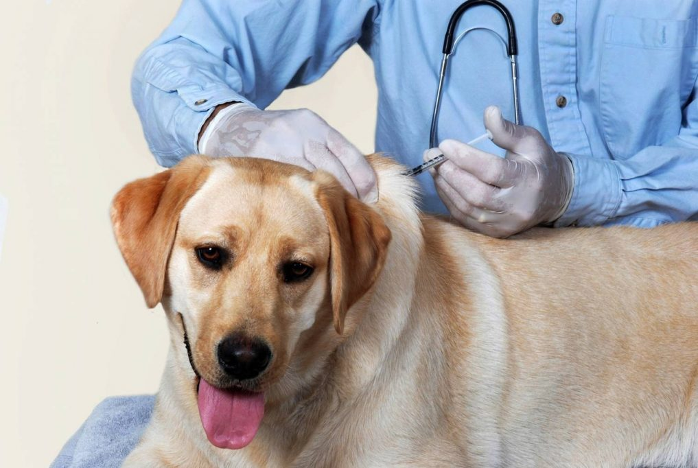 Вакцинация – лучшая рекомендация для здоровья животного