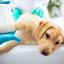 Как лечить перелом собаке