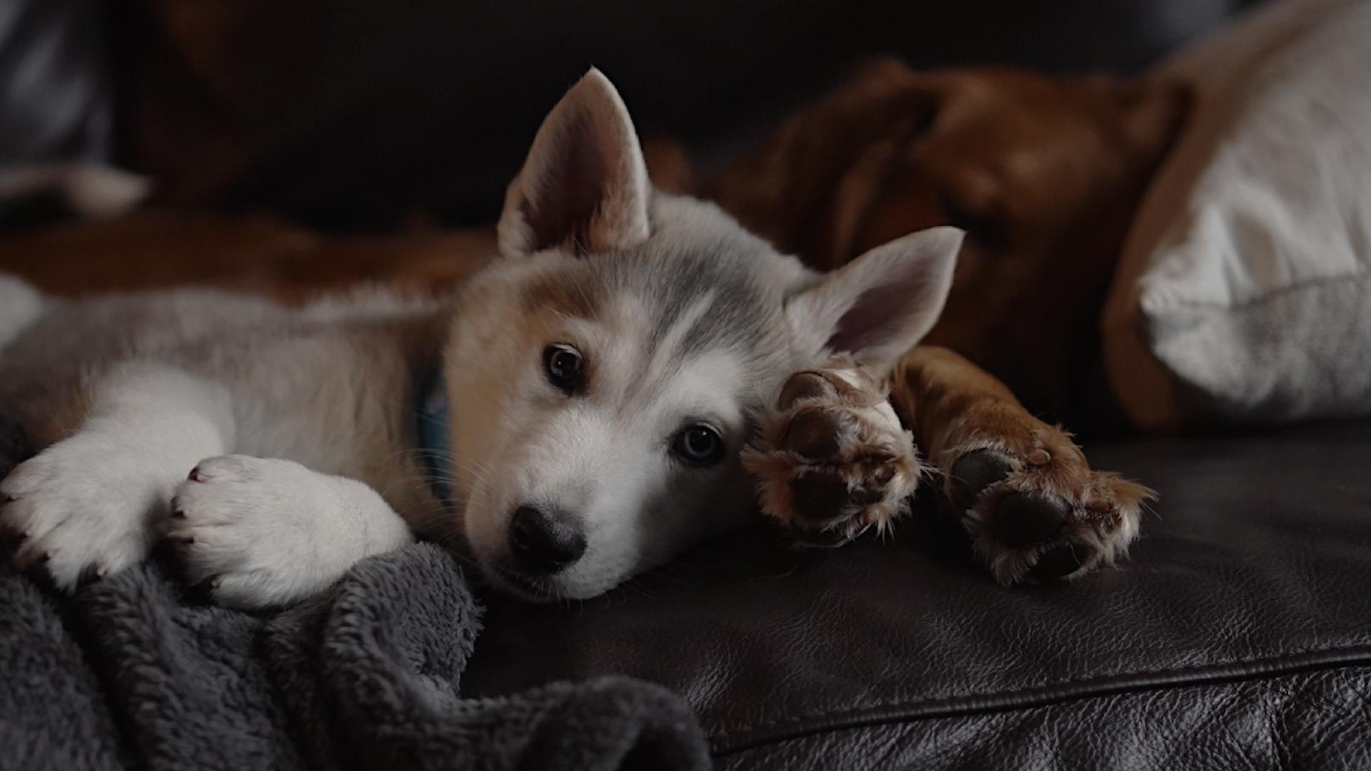 лечение собак