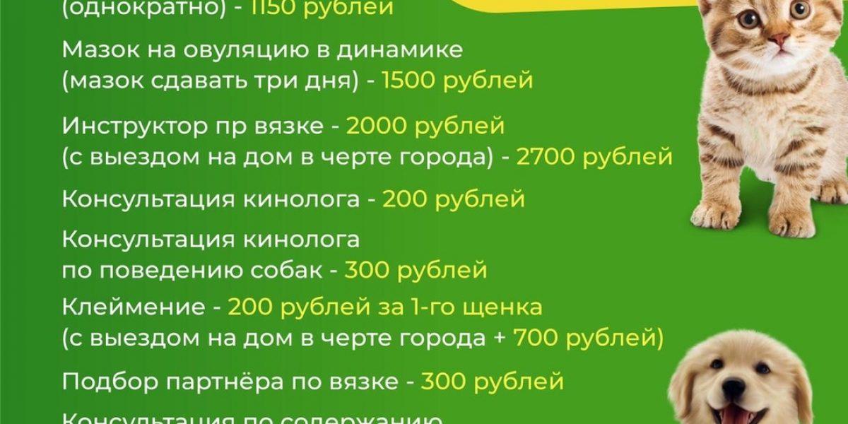 Дополнительные услуги в Кузнецком филиале ветеринарной клиники «Доктор Зоо»